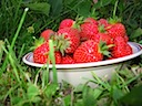 The Strawberries from the Garden